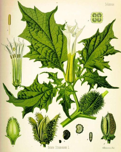 image from i84.servimg.com